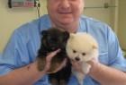 Naši veterinari u akciji