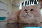 Mačak Artur progutao iglu