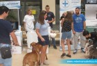 """Klinika """"Veterinar"""" na izboru za nalepšeg psa i mačku Subotice"""