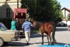 Ultrazvuk i rendgen konja