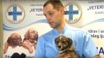 Embedded thumbnail for Zašto sterilisati kućne ljubimce?