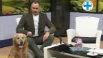 "Embedded thumbnail for ZLATNI RETRIVER ""Mića"" uživa u studiju - Mario Tikvicki, veterinar, RTV City"