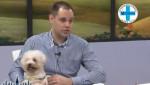Embedded thumbnail for Zaštitite svoje ljubimce od visokih temperatura - Mario Tikvicki, veterinar. RTV City Subotica